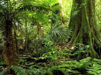 rừng 2